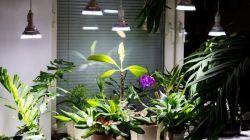 Выбор лампы для комнатных цветов