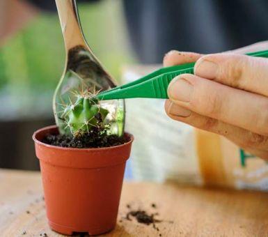 Какая земля нужна для кактусов и как сделать ее своими руками