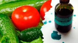 Обработка огурцов и помидоров зеленкой: особенности применения