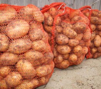 Выращивание картофеля сорта Тулеевский