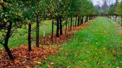 Правильный осенний уход за плодовым садом – залог урожая будущего года