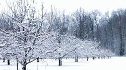 Особенности зимней обрезки плодовых деревьев