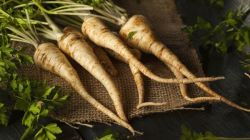 Лучшие сорта и выращивание корневой петрушки