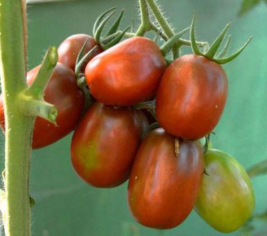 Особенности выращивания сорта томатов Де Барао