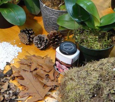 Лучший грунт для орхидей — готовый и сделанный своими руками