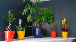 Самые красивые тенелюбивые комнатные растения