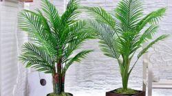 20 популярных видов домашних пальм