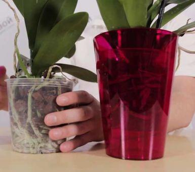 Секреты правильного выбора горшка для орхидеи