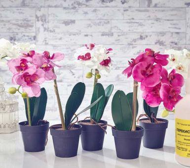 Правила применения перекиси водорода для орхидей