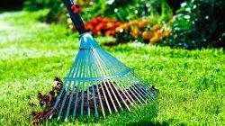 Как подготовить газон к зиме: все об осеннем уходе