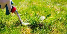 Как и чем уничтожить сорняки на газоне: эффективные способы и методы