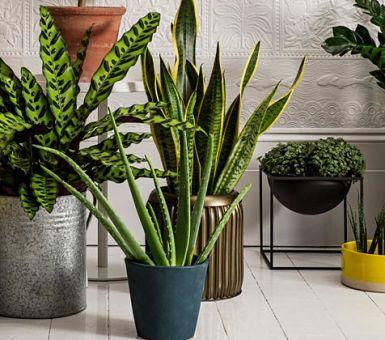10 самых крупных домашних растений