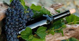 Как выбрать сорт винограда для приготовления вина