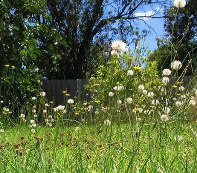 Как перекопать заросший участок и убрать сорняки