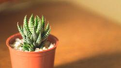 22 вида комнатных растений с колючками