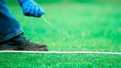 Сроки и основные правила подкормки газона осенью