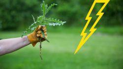 Гербициды от сорняков: правила применения