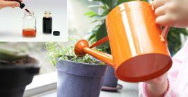Особенности применения йода для комнатных растений