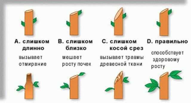 схема как срезать ветку