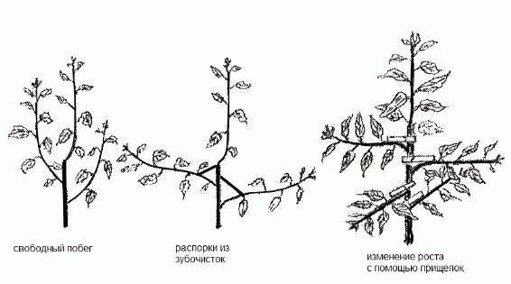 прищепки и распорки для дерева