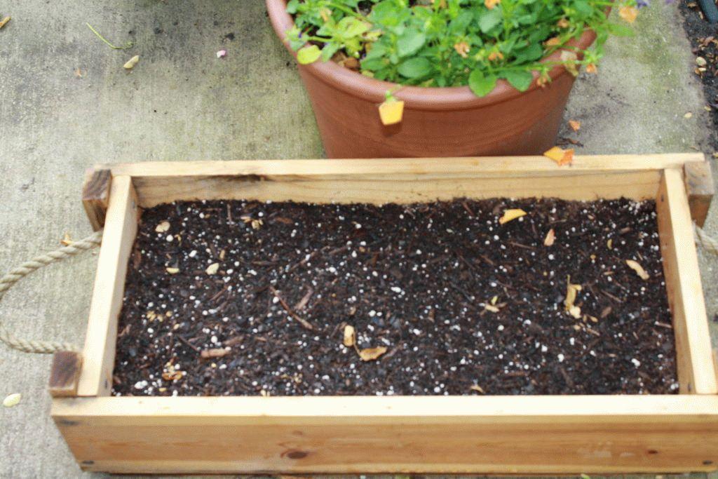 ящик для семян пиона