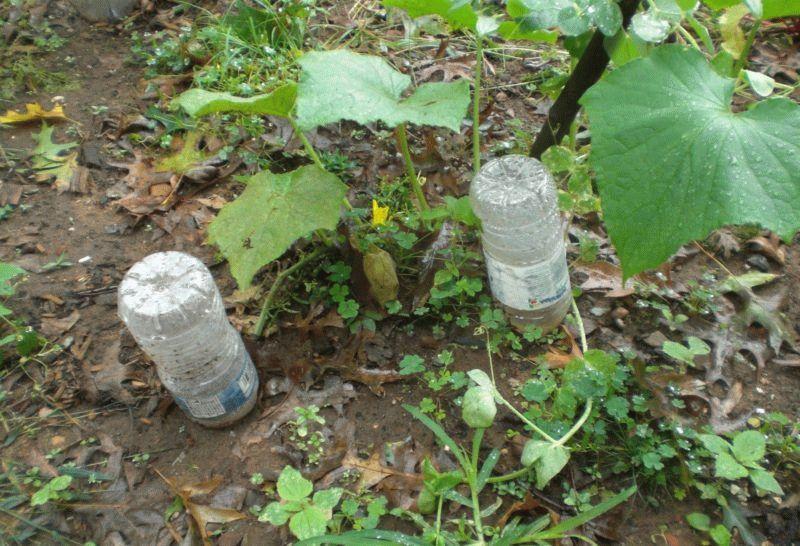 пластиковые бутылки для полива
