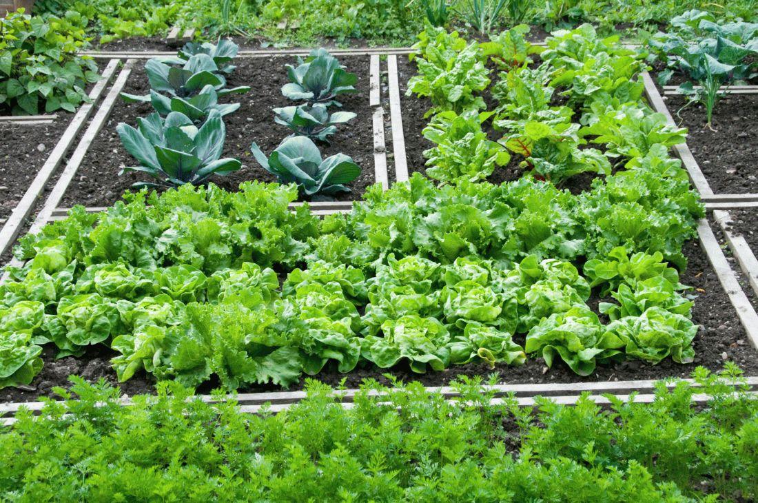 совместные посадки в огороде