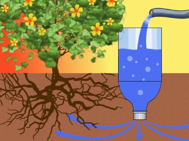полив с помощью пластиковых бутылок