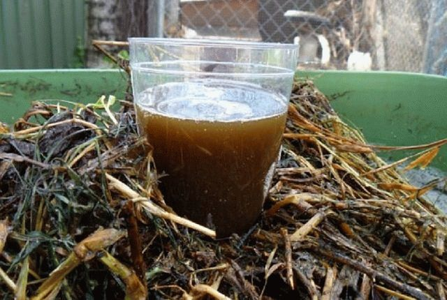 Приготовление компоста из кофейной гущи