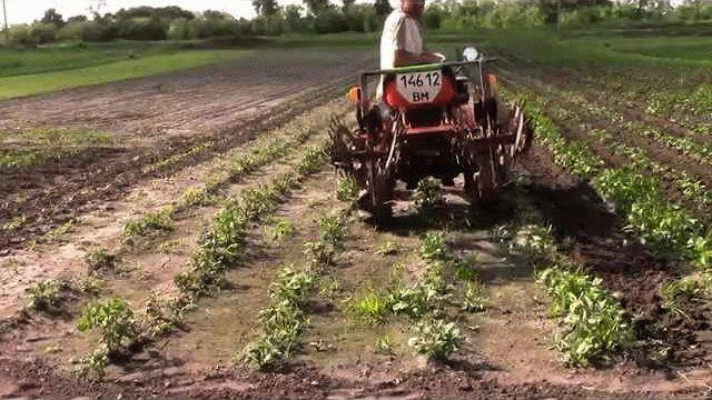 Обработка картофельных грядок