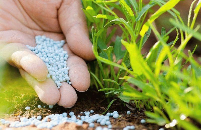 Азотные удобрения для подкормки растений