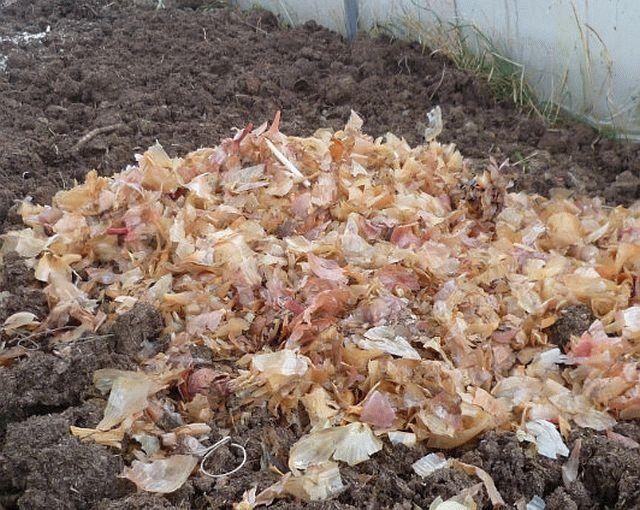 Внесение в почву луковой шелухи в сухом виде