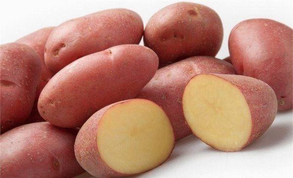 Картофель манифест описание сорта