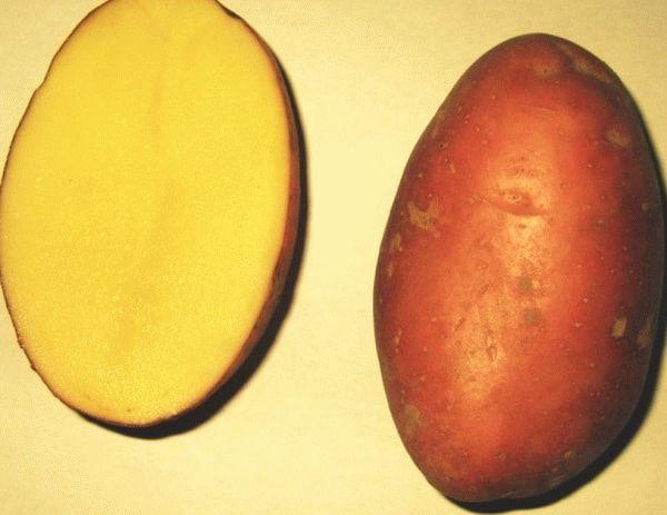 разрезанная картофелина