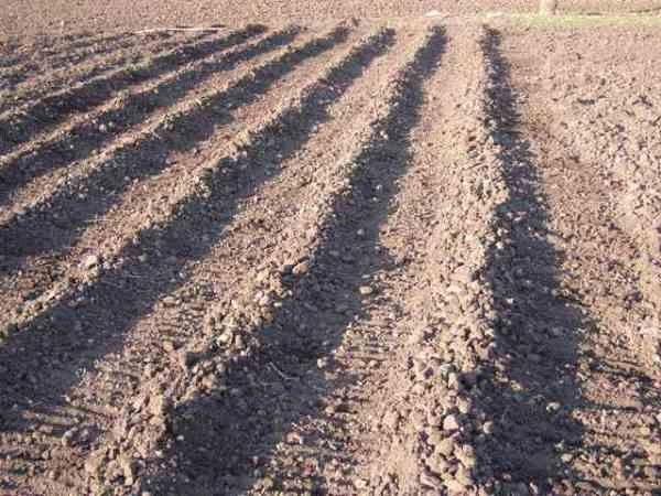 гребни для высадки картофеля