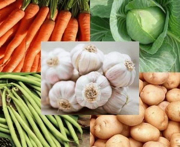 чеснок и другие овощи
