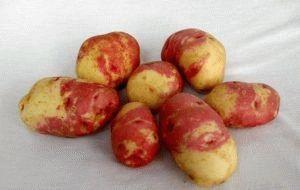 Вкусный сорт картофеля Иван-да-марья: подробное описание