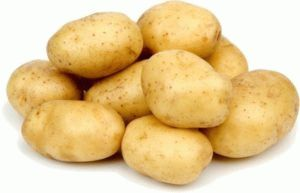 Выращивание картофеля Санте