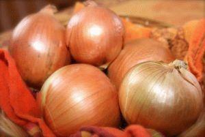 Советы по выращиванию крупного лука