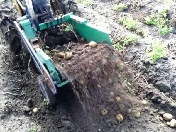 транспортерная картофелекопалка