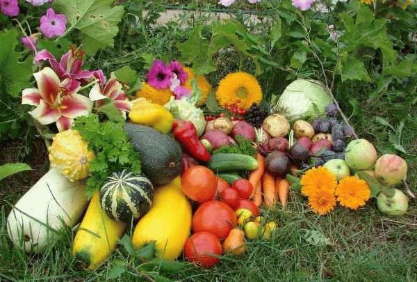 овощи на траве