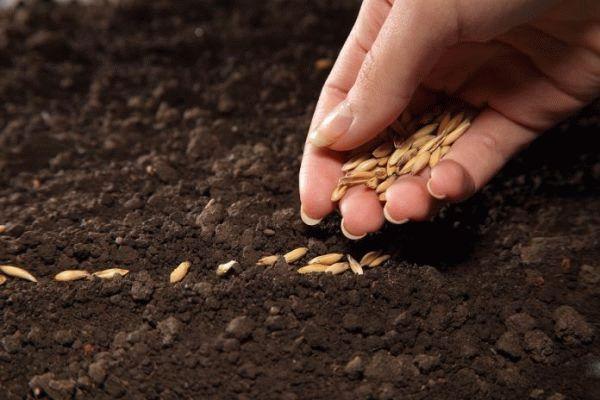 высеивание семян