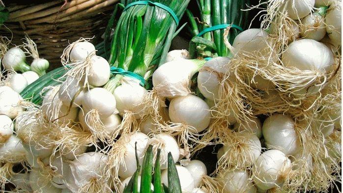 Головки белого лука с пером