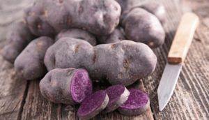 Сорта фиолетового картофеля и его полезные свойства