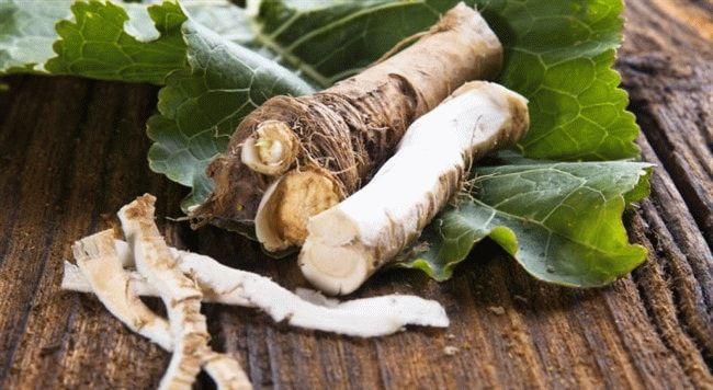 Можно ли заморозить корни хрена на зиму
