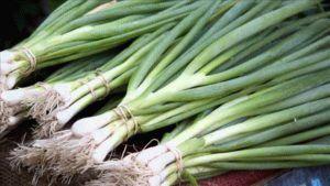 Как сохранить зеленый лук на зиму: способы заготовки