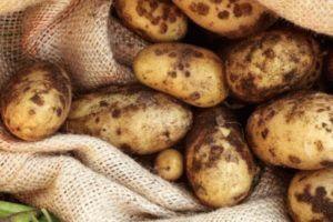 Поражение картофеля паршой: симптомы и лечение
