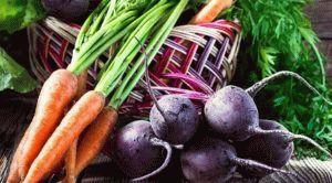 Чем можно подкормить морковь и свеклу в июне
