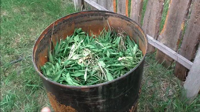 Сбор трав для подкормки лука