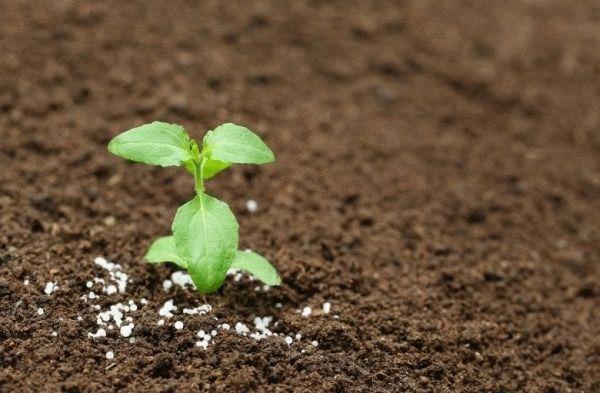 удобренное растения